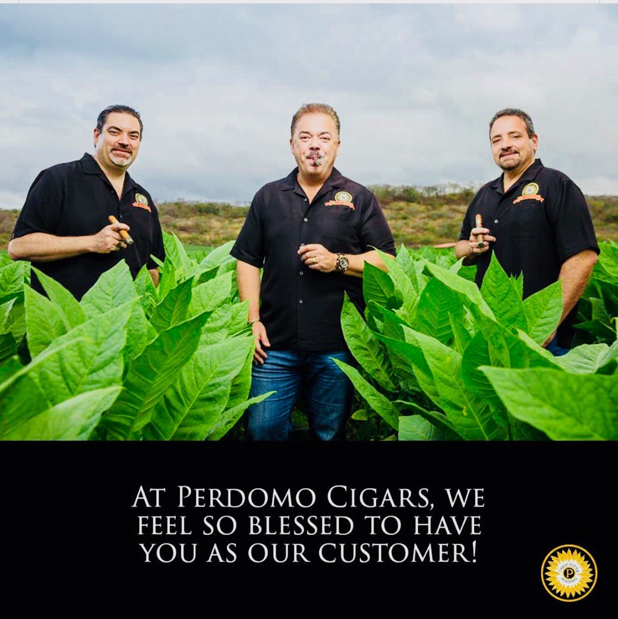 Perdomo 20th Anniversary Epicure, Sun-Grown - Box of 24 image
